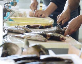 魚介類を扱うお店